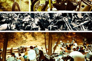 Born Free 5 Photos